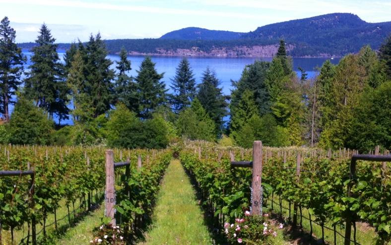 「Vancouver Island wine」的圖片搜尋結果